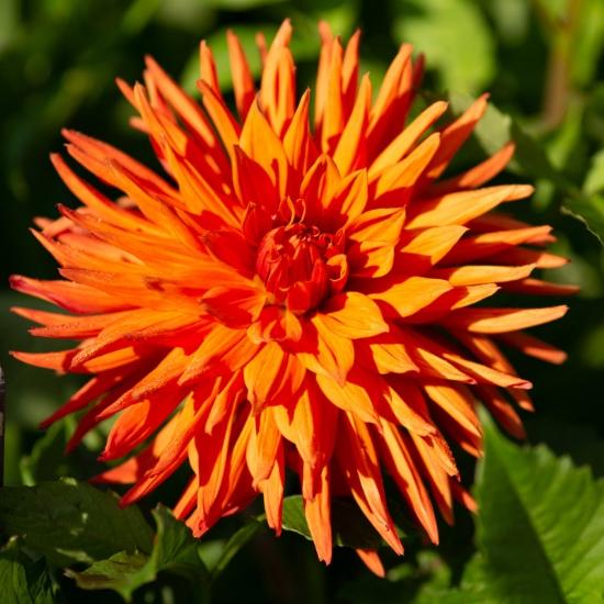 Picture of Autumn Orange