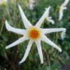 Picture of Honka White