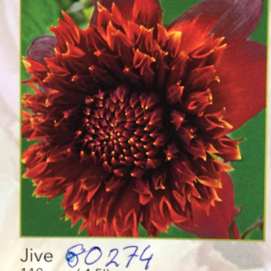 Picture of Jive