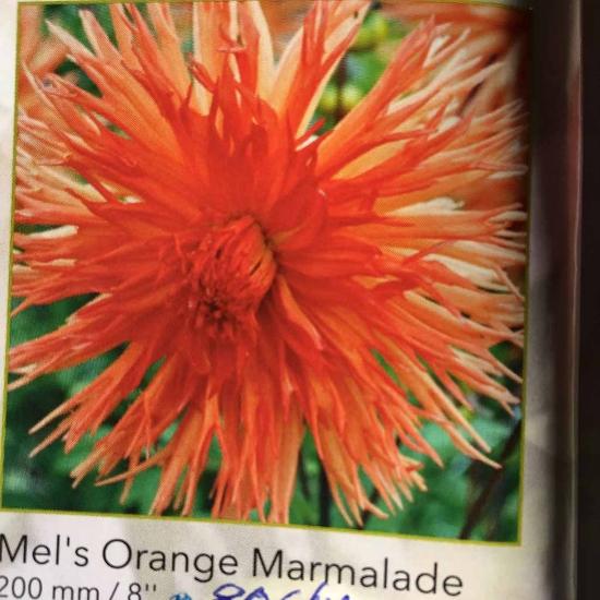 Picture of Mel's Orange Marmalade