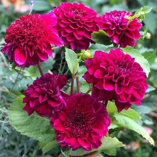 Picture of Purple Bouquet